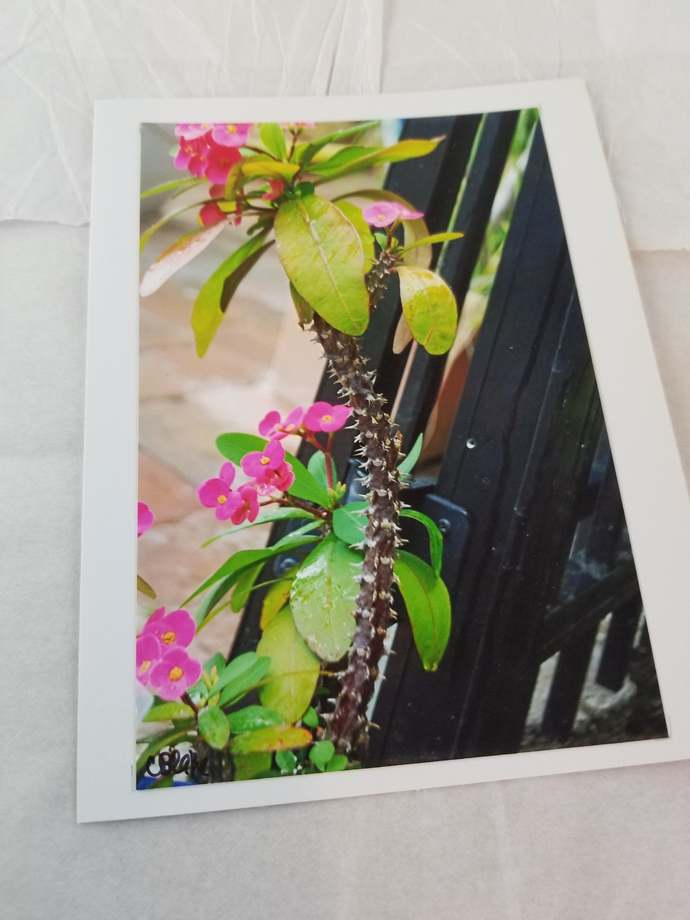 Greeting Card * Personalized Text * Flower * Photo Card * Blank Card