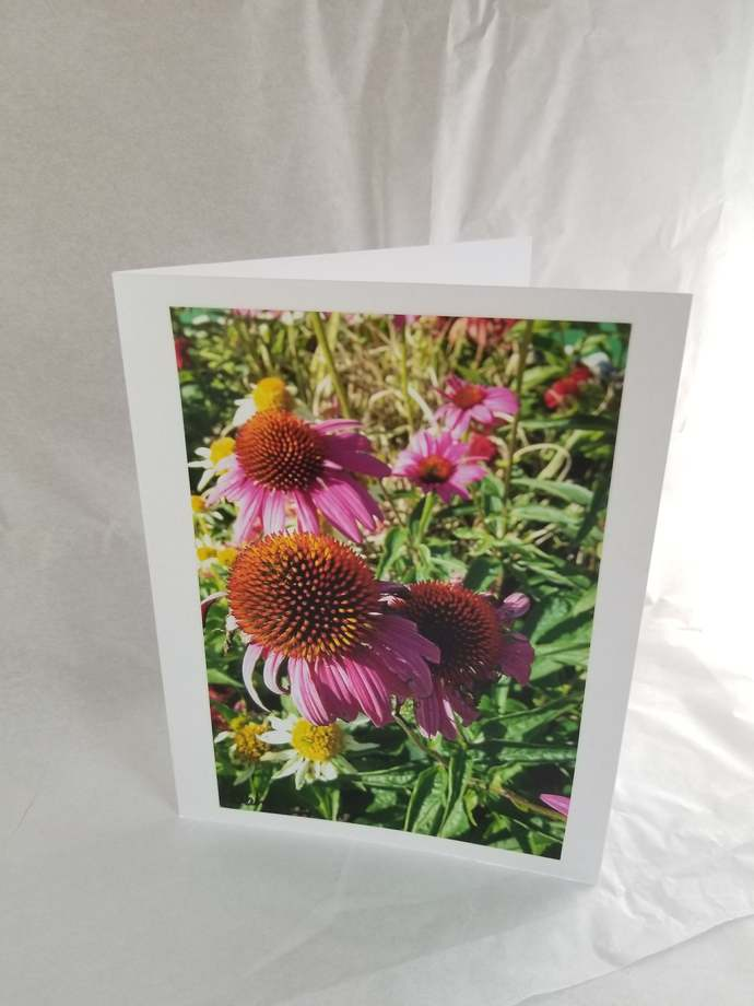 Greeting Card * Personalized Text * Cone Flowers * Echinacea Flower * Photo Card