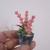 Miniature Potted Plants - Handmade