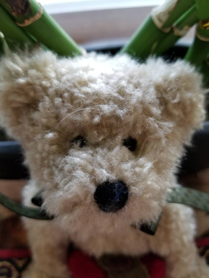 Miss Wisely Boyds Bear from The Archive Collection