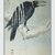 Digital DOWNLOAD Japanese Ohara Koson Shoson's Crow on a Branch Orenco Originals