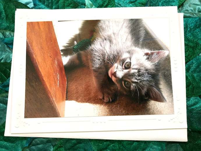 Tiny Grey Tabby Kitten Fine Art Photography Greeting, Note Card, Cat, Kitty,