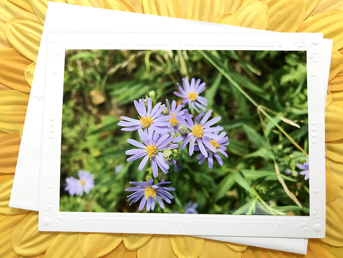 Aromatic Asters Fine Art Photography Greeting, Note Card, Flower, Floral,