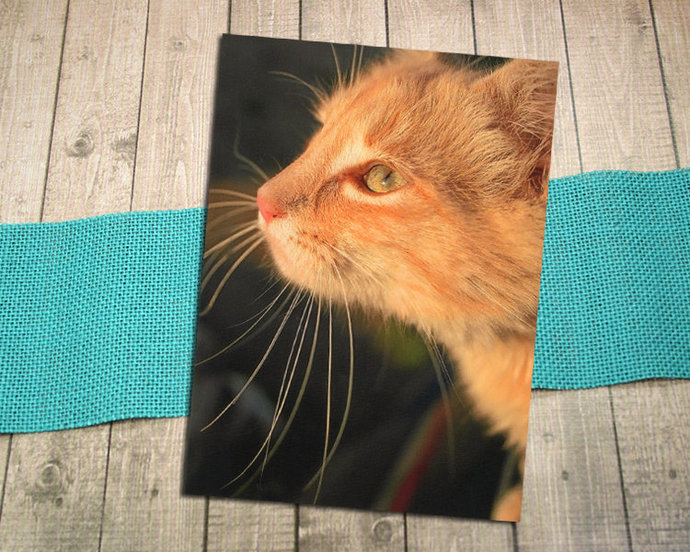Orange Tabby Whiskers Fine Art Photography Postcard, Close-up, Cat, Kitten, Pet,