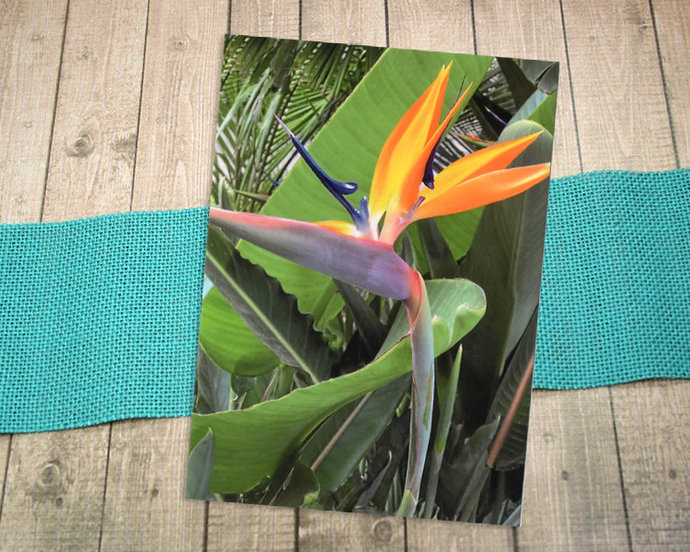 Bird of Paradise Fine Art Photography Postcard, Flower, Tropical, Florida,