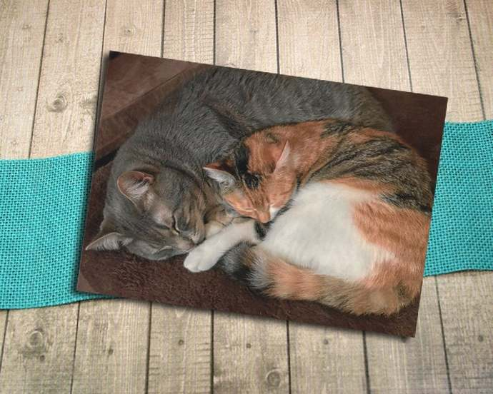 Sleeping Grey Tabby and Calico Cat Fine Art Photography Postcard, Rest, Cuddle,