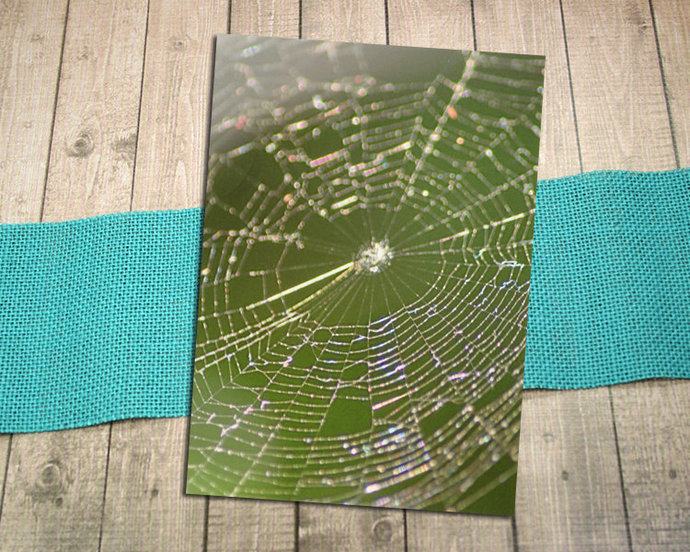 Close Up Spiderweb Fine Art Postcard, Sparkle, Sunshine, Spider, Nature,