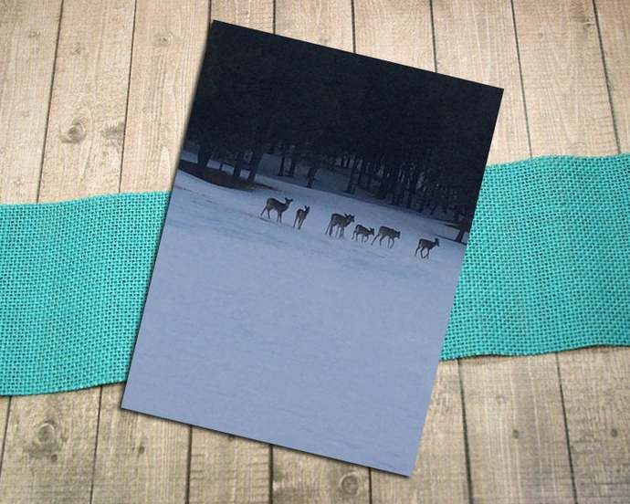 Deer Line Fine Art Photography Postcard, Snow, Winter, Country, Sunset, Dusk,