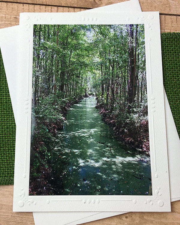 Okefenokee Swamp Photography Card, Old South, Nature, Wilderness, Outdoors,