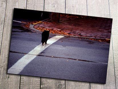 Cross Walk Black Kitty Postcard, Black Cat, Road, Bricks, Beatles, Friendship,