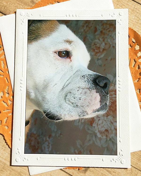 Old English Bulldogge Fine Art Photography Card, Dog, Bulldog, Close Up, Sweet,
