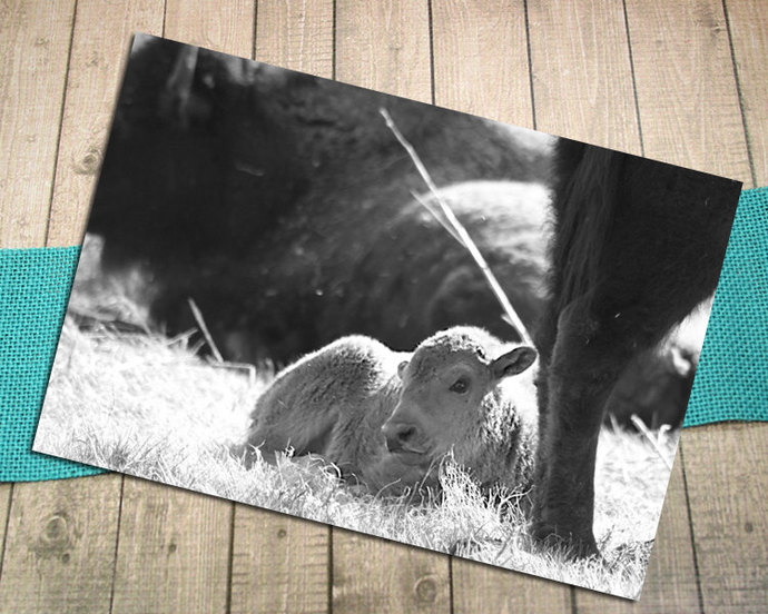 Sunshine Silhouette Cinnamon Black & White Fine Art Postcard, Buffalo, Infant,