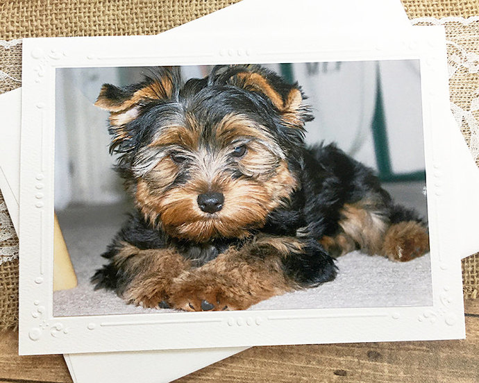 Yorkshire Terrier Photography Card, Dog, Puppy, Cute, Fluffy, Note, Pet,