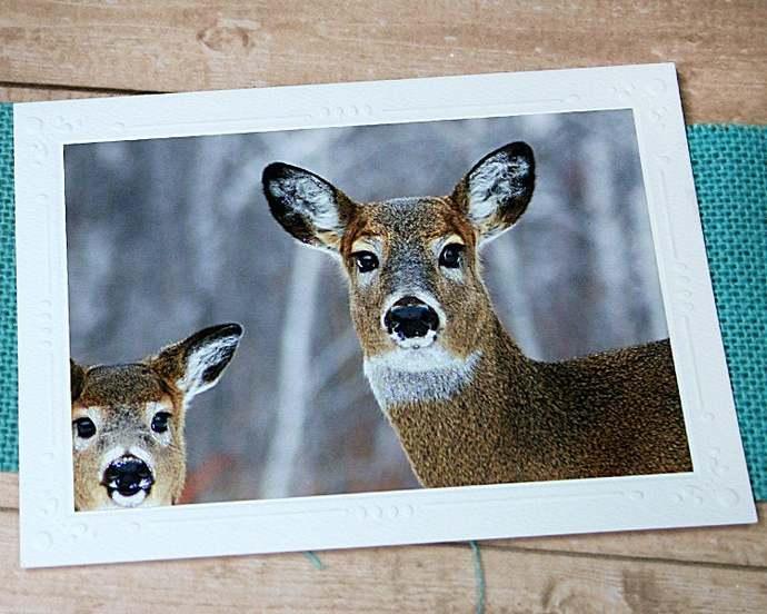 Glitter Winter Deer Fine Art Photography Card, White-Tailed Deer, Forest, Snow,