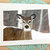 Young Deer Fine Art Photography Note Card, Nature, Outdoors, Winter, Forest,