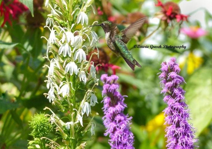 nature photography prints, wall art, Minnesota art print 8x10, gift for him or