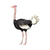 Ostrich with Flowers - Volstruis - Safari Animals Series - Wall Decal - Great