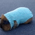 Blue knit sweater for guinea pigs, Dwarf bunny knit clothes