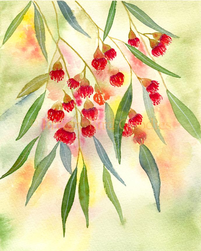 Flowering Gum Print, Albany Red Gum Print, Gum Tree Print, Watercolor Flower,