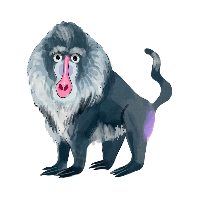 Chimpanzee, Baboon, and Gorilla Set - Set of 3 Decals - Safari Animals Series -