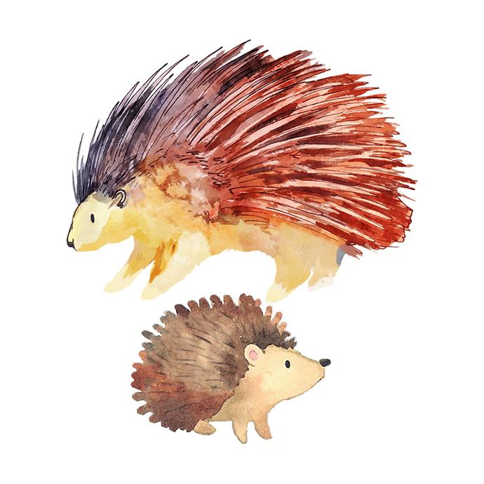Hedgehog and Porcupine Set - Set of 2 Decals - Safari Animals Series - Wall