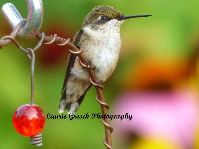 nature photography prints, wall art, Minnesota art print 11x14, gift for him or
