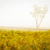 Dreams of Goldenrod and Fog Rural - Farmhouse Landscape Photograph Wall Art