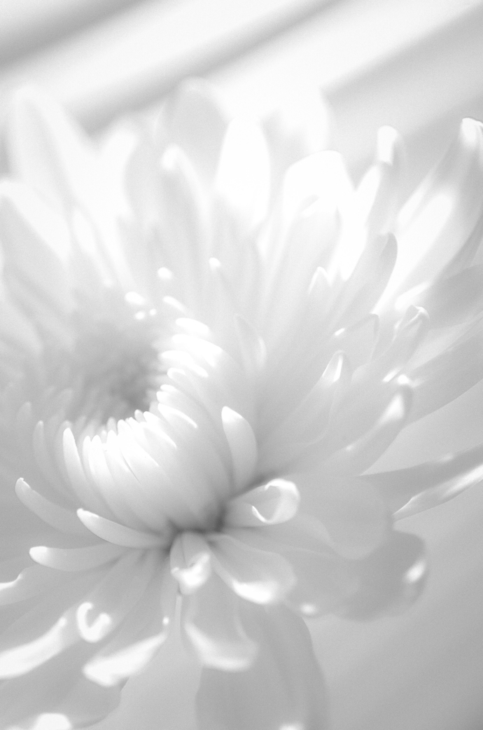 Infrared Flower - Black & White Floral / Botanical Nature Photograph Wall Art