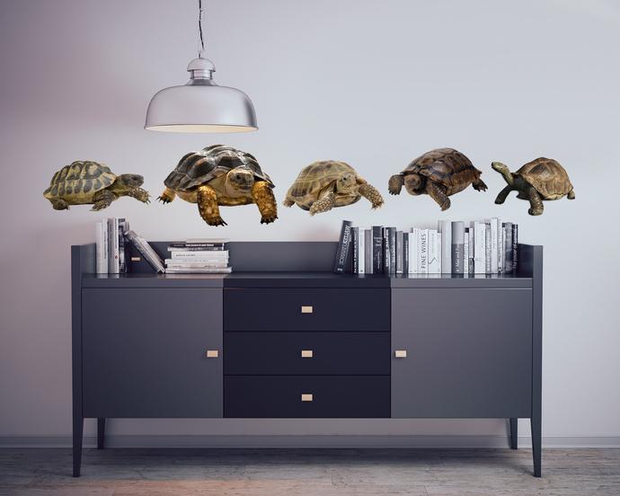 "Tortoises - Turtles - Vinyl Wall Decal Set - Various Sizes on a 28"" x 27"" sheet"