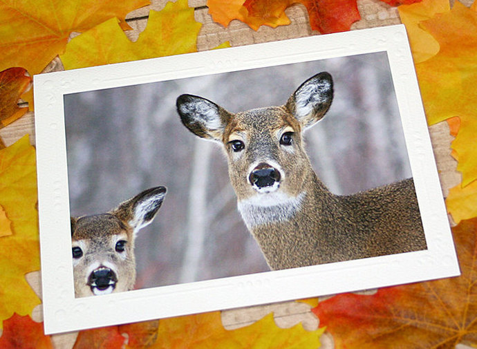 Oh Deer! Fine Art Photography Card, Mom and Baby White-Tailed Deer, Nature,