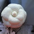 "3 1/4"" Milk White Camellia Silk Jacquard Brooch Pin"