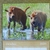 2020 Calendar, Wall Calendar, Original Photography, Bison Calendar, Minnesota,