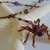 Gemstone Beaded Spider Necklace, Halloween Boho Jewelry, Copper and Cat's Eye