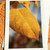 Glitter Accent Ash Leaf Fine Art Photography Card, Autumn, Fall, Changing