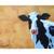 Cow Painting on 5x7 inches on Boxed Panel, Farm Animal Art, Farmhouse Decor