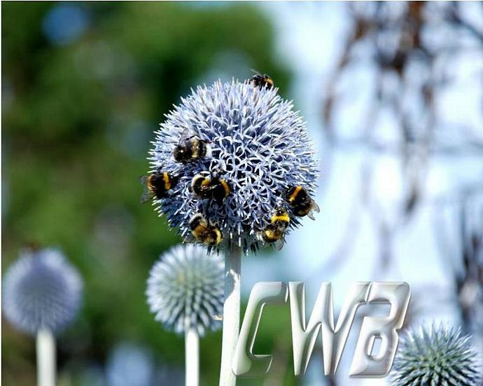 Honey Bees fine art print