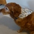 Dog bandana, Dog fashion, Size large, Ducks bandana, Waterfowl bandana, Gift for