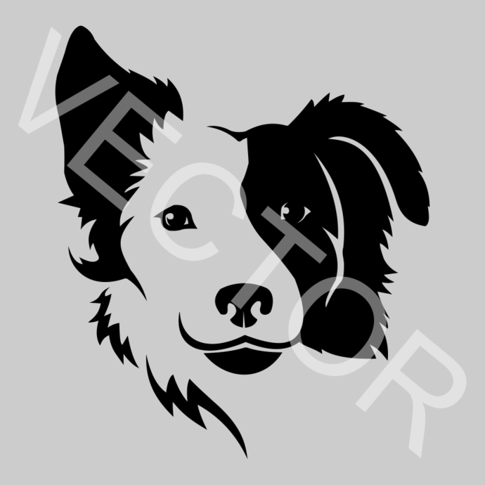 Border Collie Graphics SVG Dxf EPS Png Cdr Ai Pdf Vector Art Clipart instant