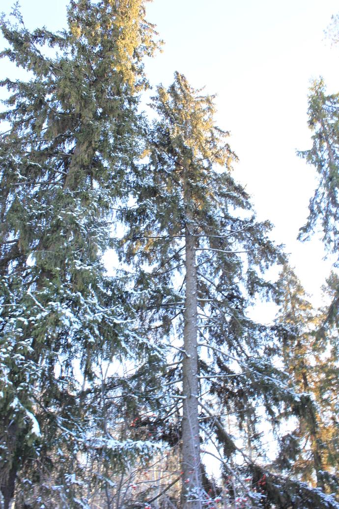 Wood winter