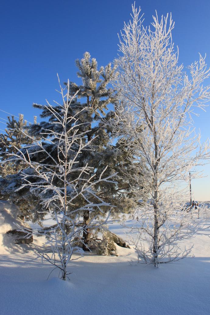Winter  exclusive photo