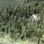 Nature wood2
