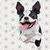 Boston terrier svg file, boston terrier shirt, boston terrier svg, boston