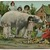 Polar Bear, Tiger and Giant Racoons Antique Montage Multiple Babies Postcard