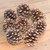 Individual EXTRA LARGE Natural Organic Arizona Ponderosa Pinecones Pine Cones