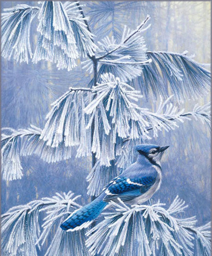 Frosty Morning BLue Jay Cross Stitch Pattern***LOOK***X***INSTANT DOWNLOAD***