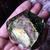 SALE Botanical Tarot Crystal The Sun