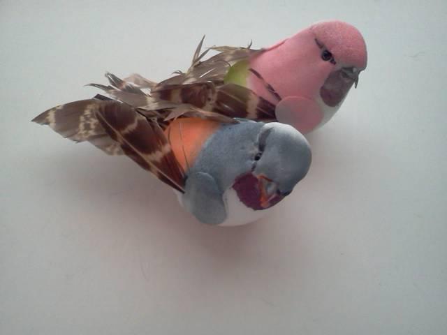 2 Birds*