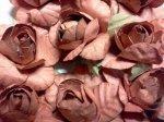 Brown Roses*