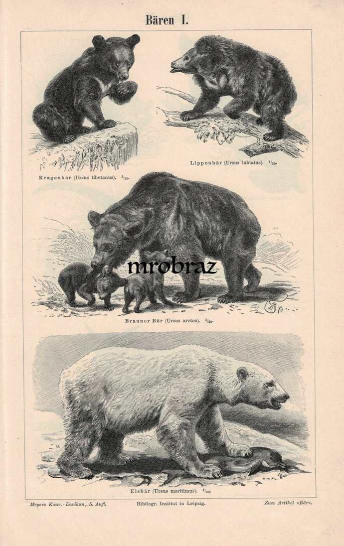 Antique Animal Print, Vintage Animal Illustration, Bear Print, White Bear, sloth