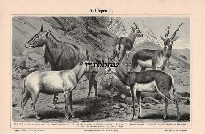 Antique Animal Print, Vintage Animal Illustration, Indian Antelope print, saiga